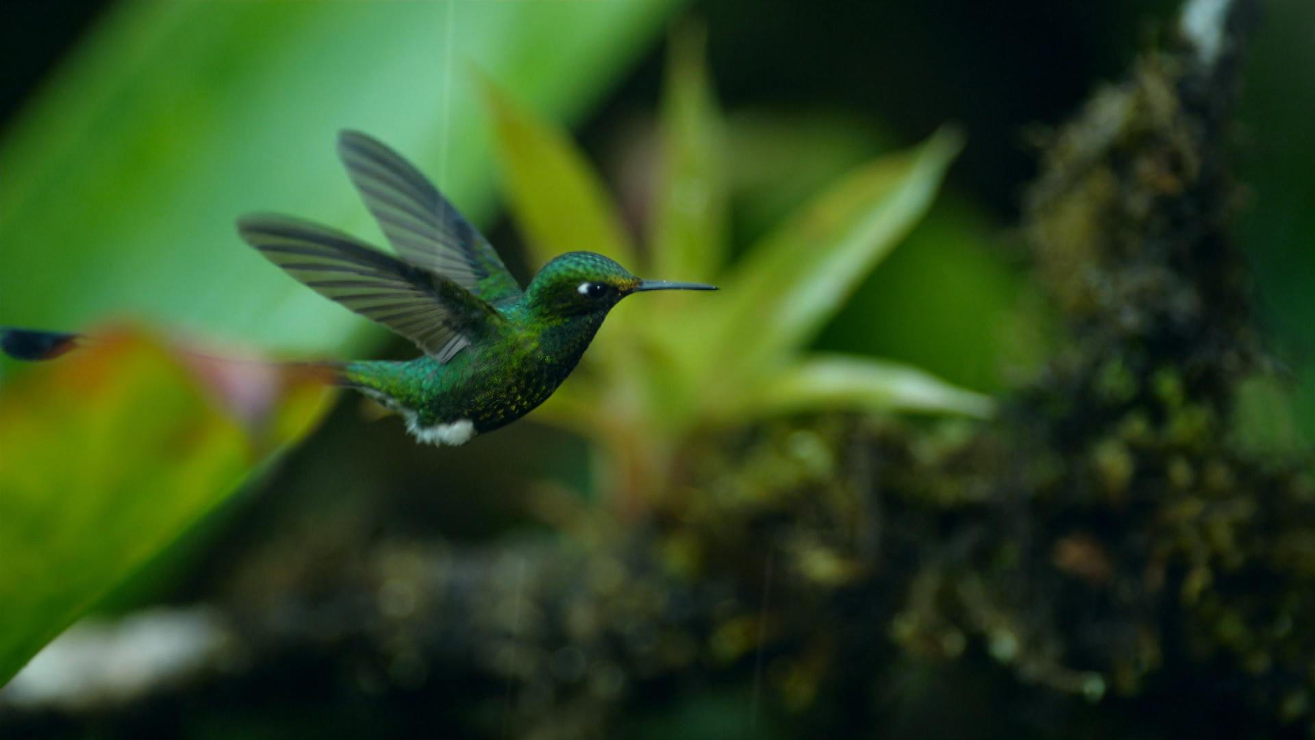 Kolibrie in een regenstorm