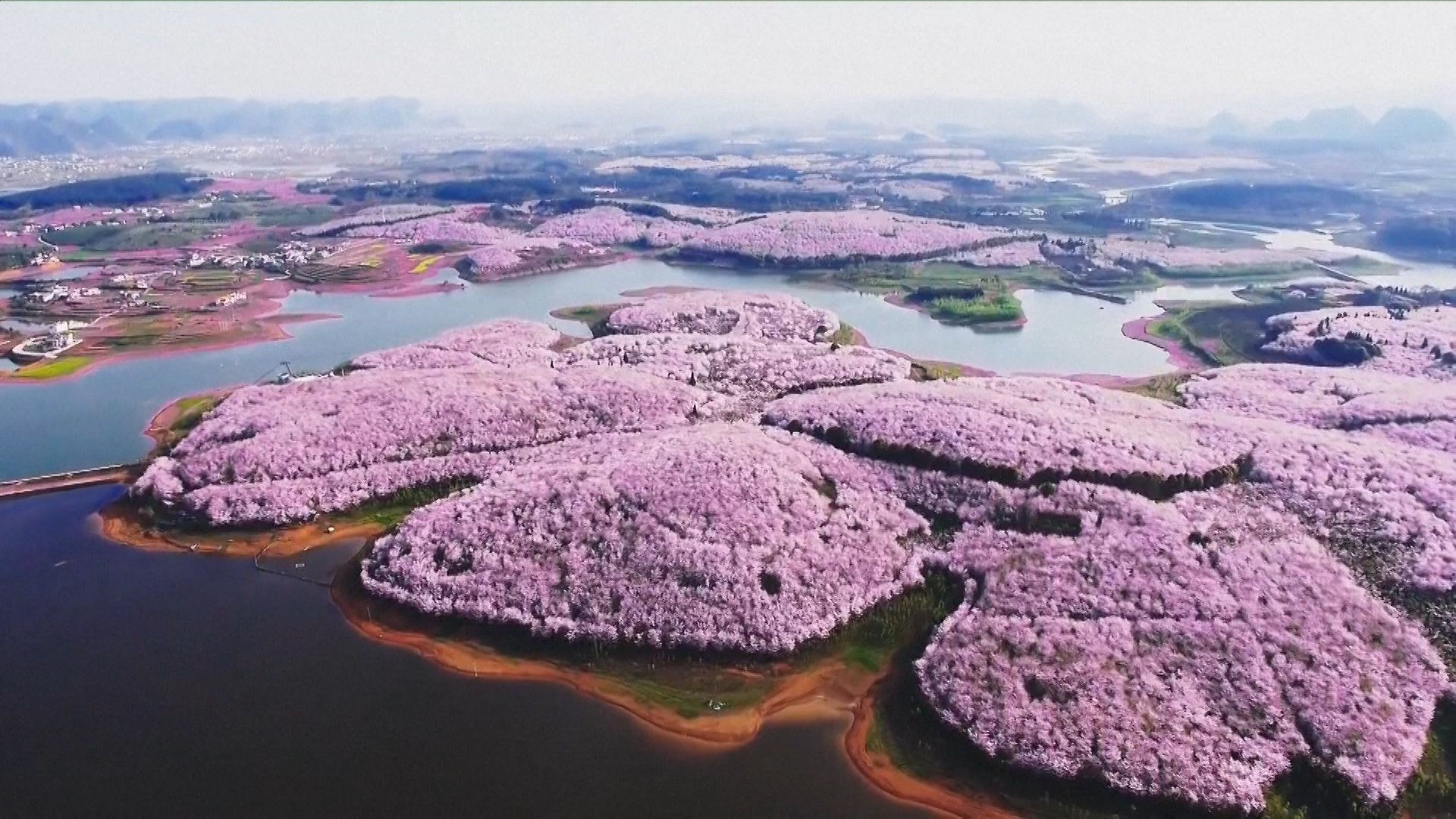 Cherry blossoms and other beautiful flowers usher in spring in china cherry blossoms and other beautiful flowers usher in spring in china izmirmasajfo